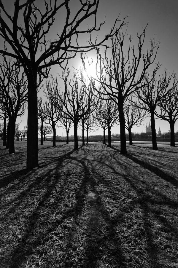 b&w_tree