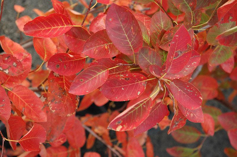 Harvest Season Hues Red Kinghorn Gardens