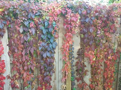 Harvest Hues: Multicolored Medley