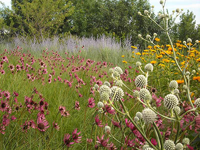 Places & Spaces: Planned Prairie