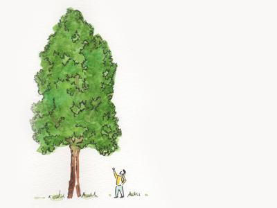 Signature Tree: Quercus macrocarpa 'Urban Pinnacle'
