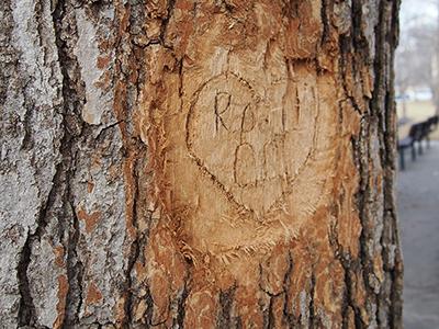 Love Kills Trees