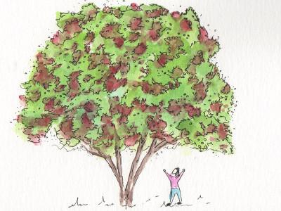 Signature Tree: Acer tataricum 'Rugged Charm'