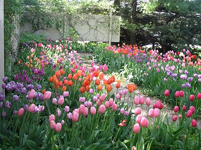 Spring Bulb Inspiration