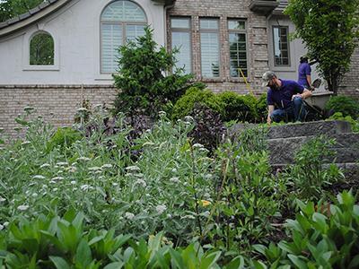 Suburban Perennial Meadow Designer Q&A