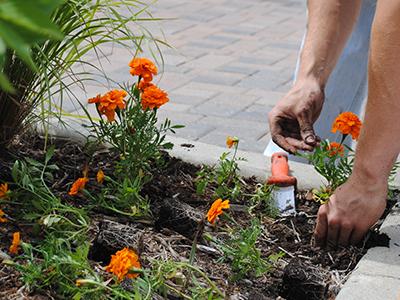 Seven Deadly Sins of Spring Gardening