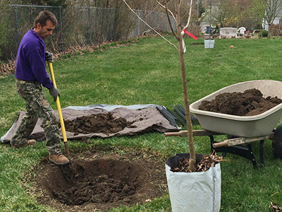 Questions You Should Ask Before Planting a Tree