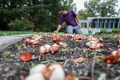 One day, 12,000 Bulbs and 13 Purple Polos
