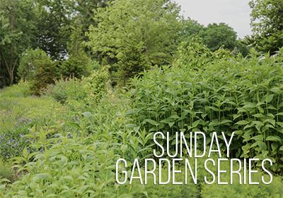 Sunday Garden Series: Buddy Plants