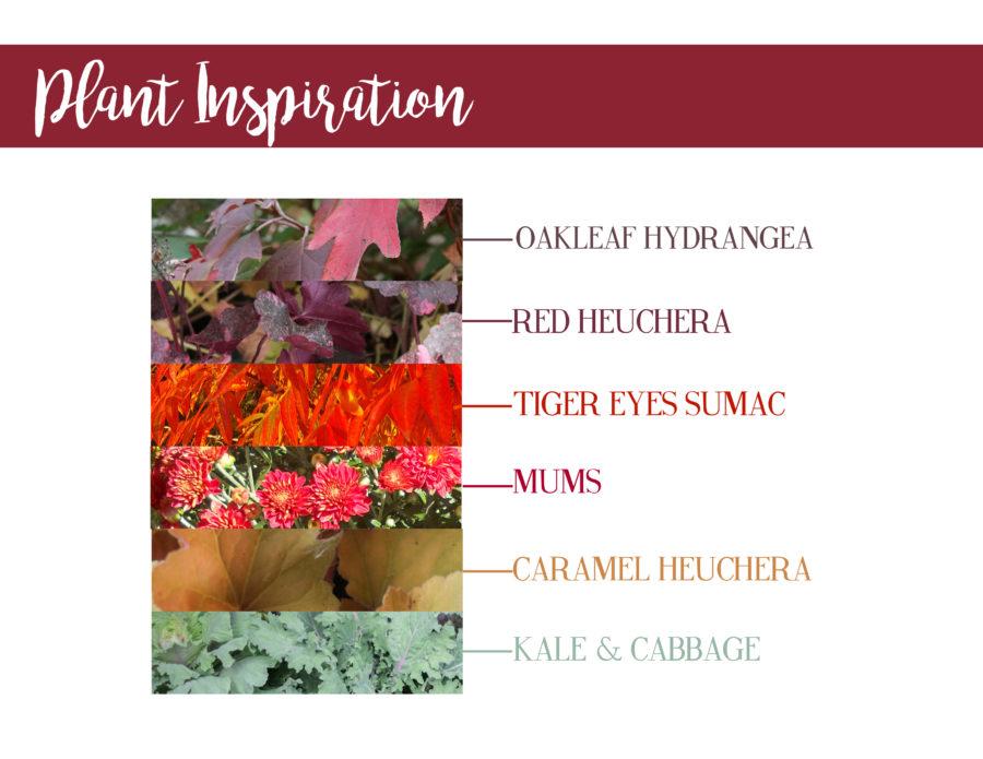 Fall plants, inspiration, oakleaf hydrangea, red heuchera, tiger eyes sumac, mums, caramel heuchera, kale, cabbage