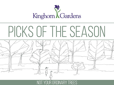 Our Picks of the Season: Not Your Everyday, Ordinary Trees